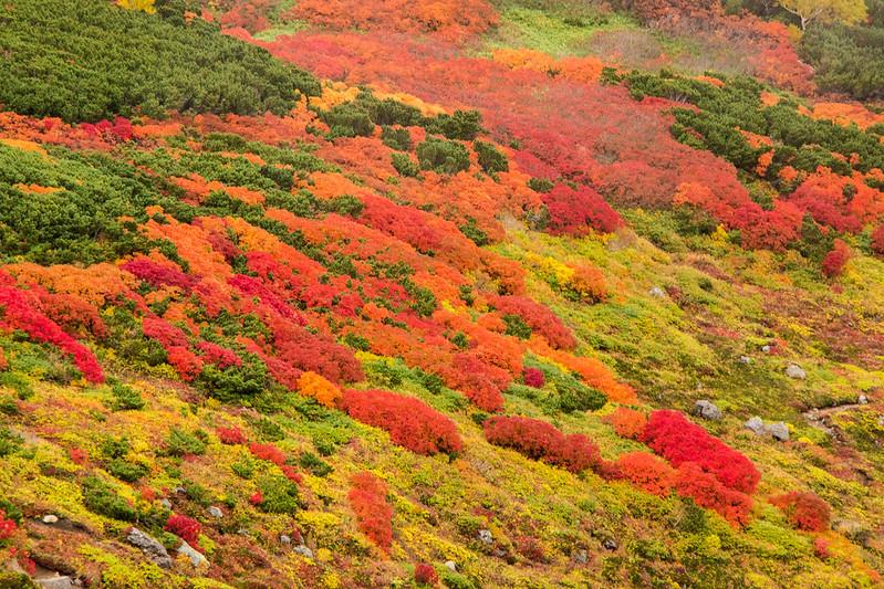 20150918-大雪山黒岳-0744.jpg