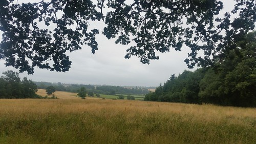 12. View of Hobbitshire from beneath an oak tree