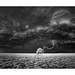 Lightning Strike II by Sandra Herber