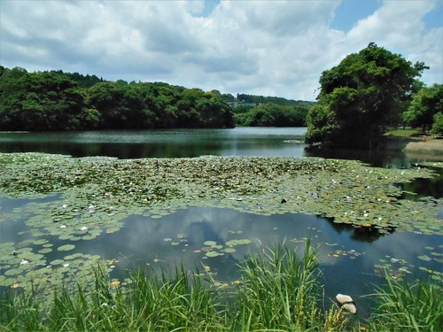 jp-Saitobaru-Aoshima (1)