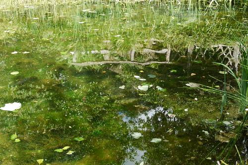 Sunk Garden