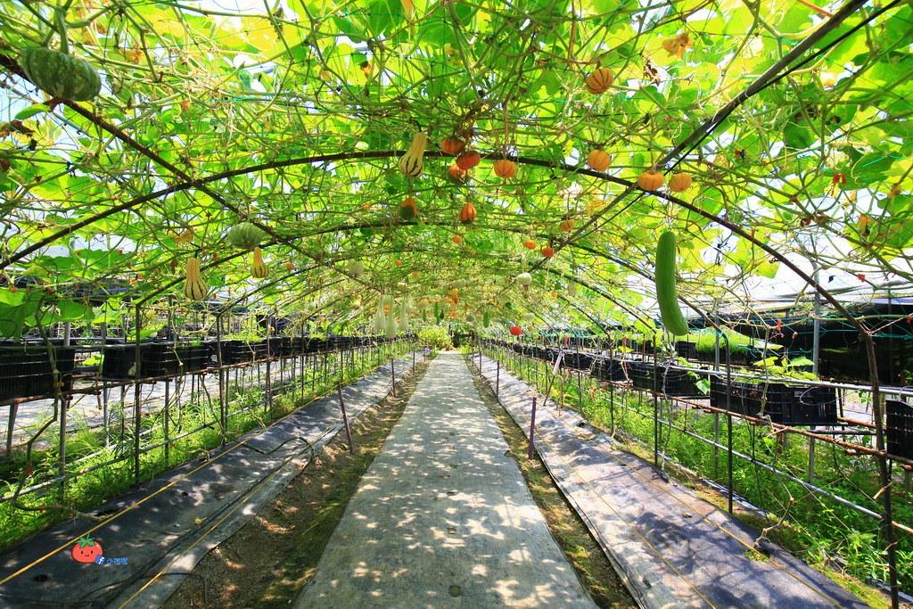 壯圍景點推薦 南瓜隧道 旺山農場