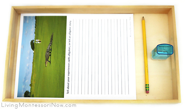 Alligator Writing or Dictation Tray
