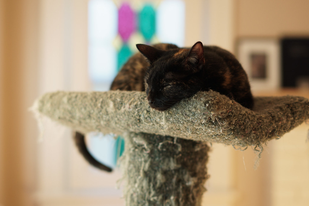 Our cat Trixie sleeps at the top of the old cat tree