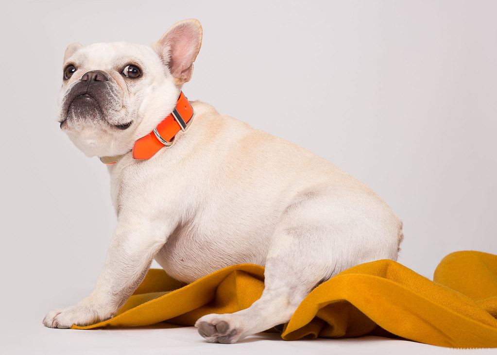 Pet Photography • HouseCatStudio