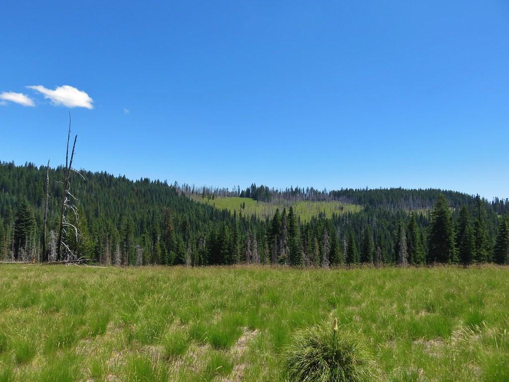 Meadows along the Grasshopper Trail
