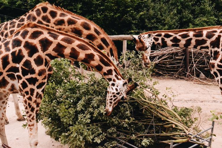 Im Zoo (6)