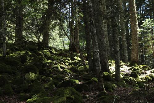 (64) Lac de Bious-Artigues 36036655362_c030e95e23
