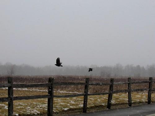 birds in a storm. Photographer Joann Kraft
