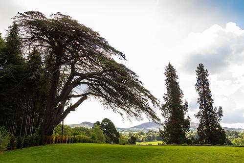 marcial bernabeu bernabéu ireland irlanda enniskerry powerscourt gardens trees mansión jardines arboles sky blue cielo azul nubes