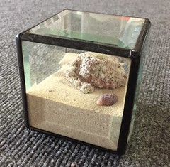 Closed Treasure Terrarium