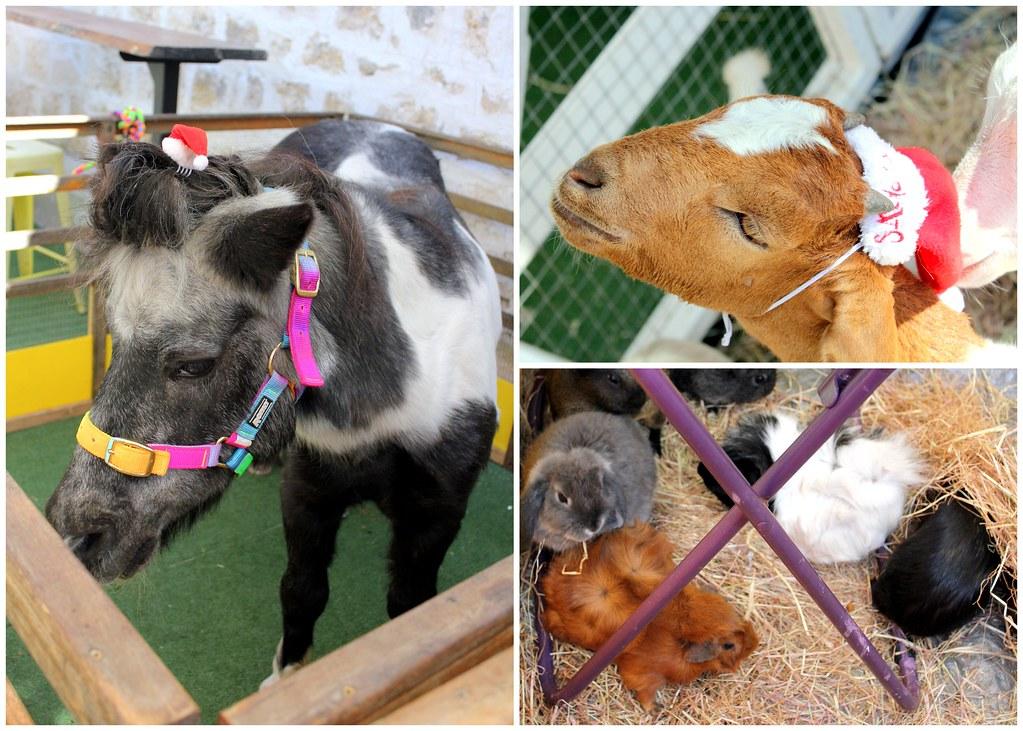 fremantle-market-petting-zoo
