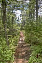 Kearney Lake Trail System - Fox Lake Trail