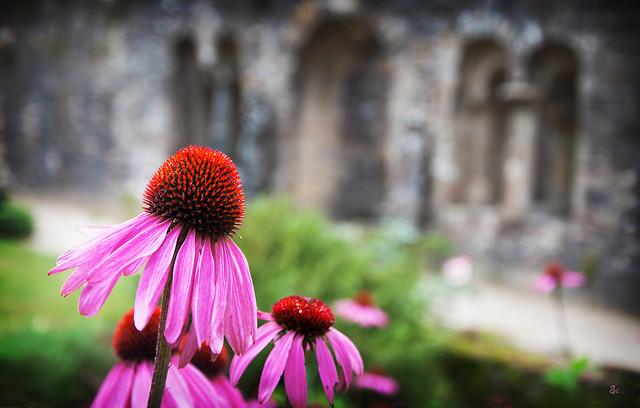 des ruines en fleurs