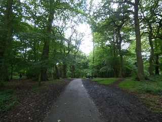 Warley Woods - path | by ell brown