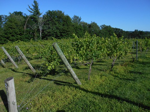 grape trellises