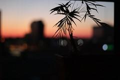 Vapourwave sunset