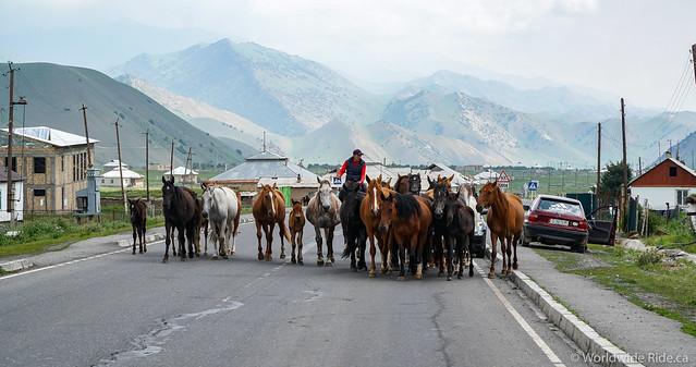 Kyrgy_-14