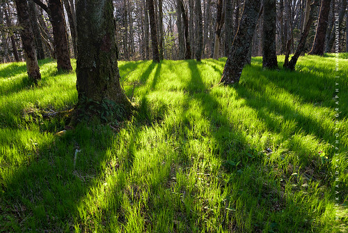 spring green grass northcarolina westernnorthcarolina nc wnc forest trees shadows longshadows seasonal lastlight evening outdoors outside landscape outdoorphotography