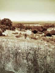 landscape. Santa Rosa, Sonoma.