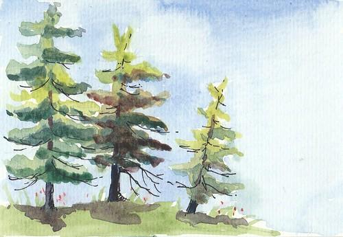 20170723_tiny_pines