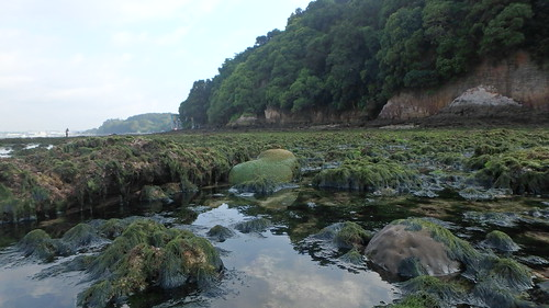 Living reefs of Sentosa Tanjung Rimau