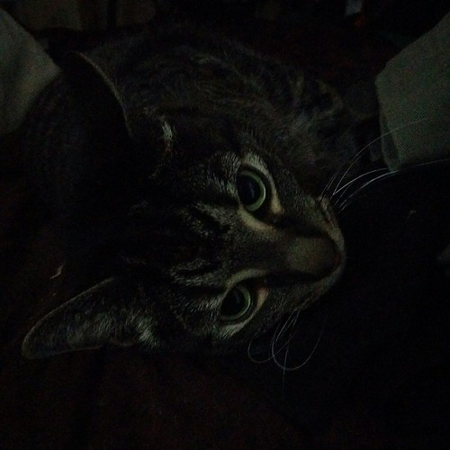Shakespeare, in bed in the dark #toronto #cats #shakespeare #catsofinstagram #caturday