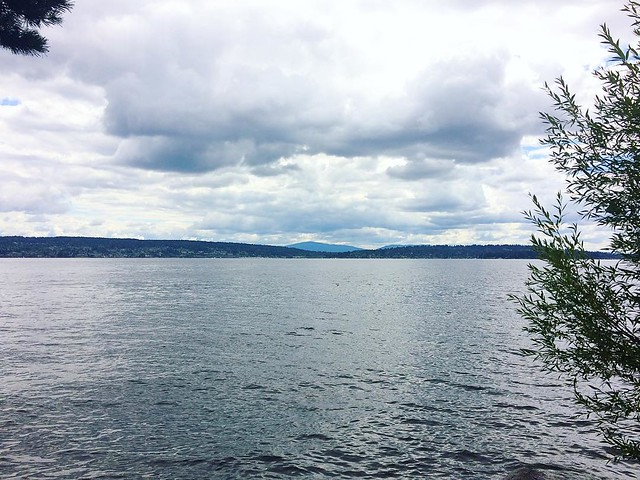 Cloudy at Magnuson Park today.