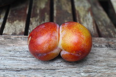 Siamese Plum - Bottom View