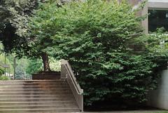 Steps at Hickory Cluster