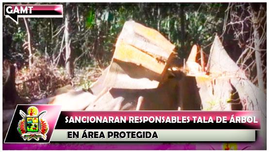 sancionaran-responsables-tala-de-arbol-en-area-protegida