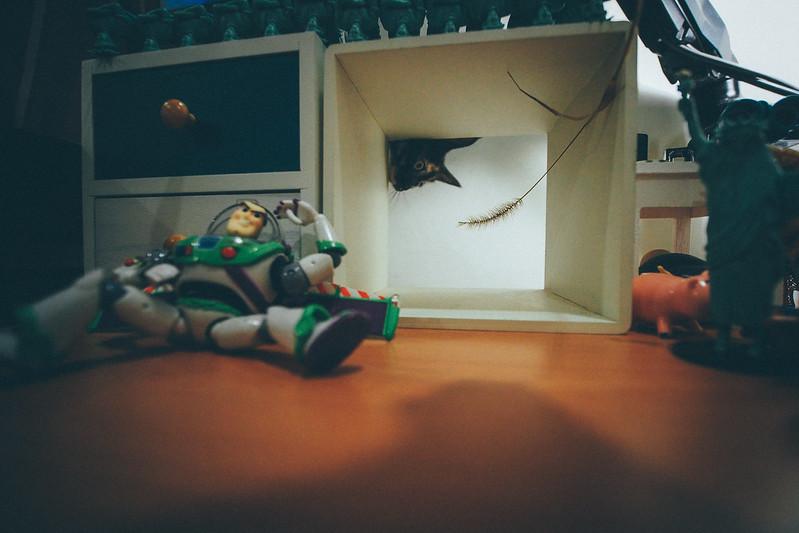 小花喵|Laowa 7.5mm f/2.0