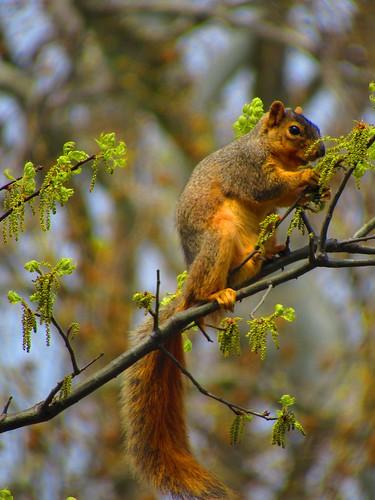 Squirrel! Photographer Joann Kraft