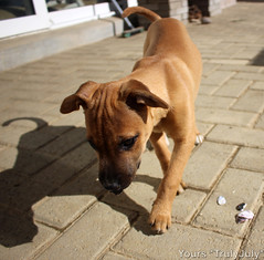 #Dog #Toy: Seashells