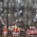 ladybugdiscovery posted a photo:	... with 3 crystal glasses for bokeh