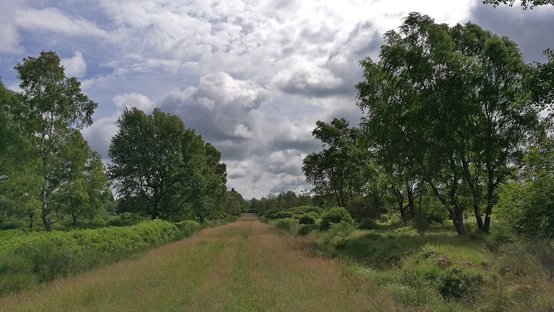 Belgien-Moor