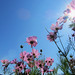 Flower Shining
