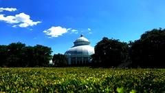 New York Botanical Garden VI