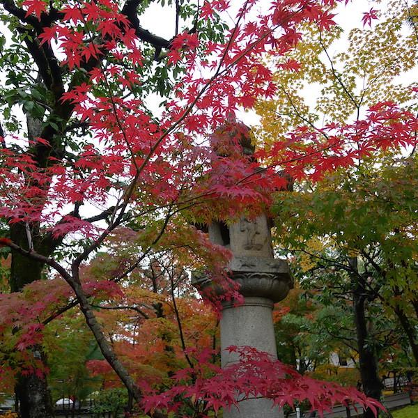 213-Kyoto