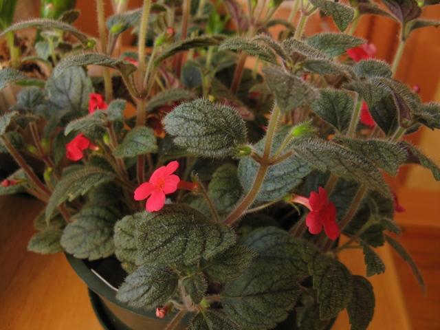 Autres plantes chez Cloo 35748596281_0f38e90771_o