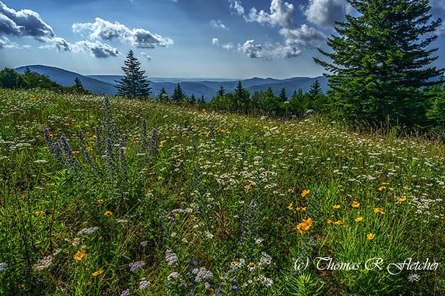 Summer Flowers Highland Scenic Highway