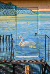 swans swimming past the doorway