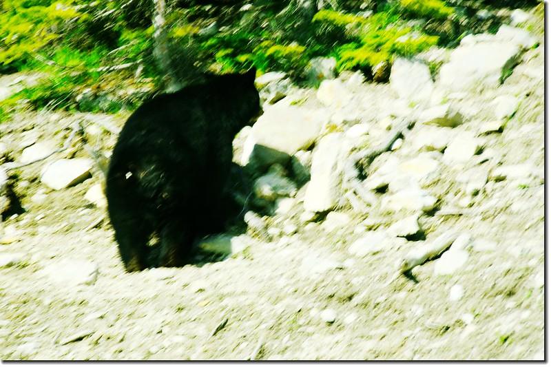 Bear on the cliff
