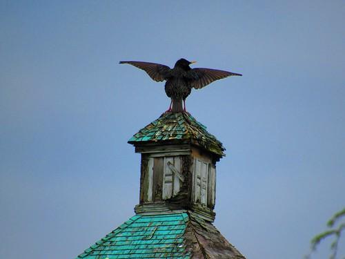 atop the roof!Photographer Joann Kraft