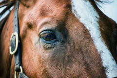 The Horse's Eye