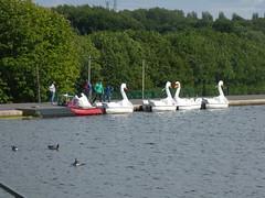 Dartmouth Park, West Bromwich - Pleasure Pool - swan boats