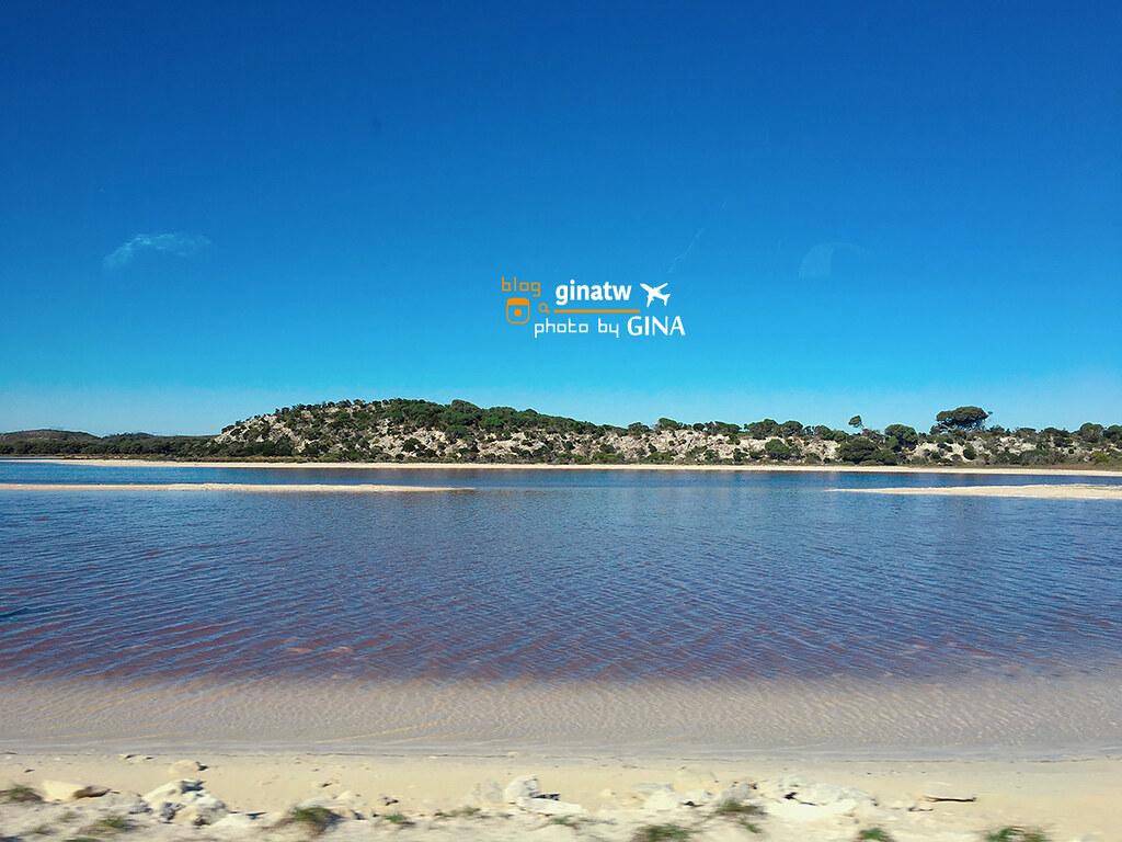西澳伯斯景點》伯斯必去 羅特尼斯島(ROTTNEST ISLAND)超級放鬆的悠哉小島 隨處可見短尾矮袋鼠(Quokkas) + 偶見粉紅蝴(Pink Lake)+Hillarys Boat Harbour碼頭搭船出發! @Gina Lin