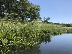 Mallows Bay adventure around the Ghost Fleet of the Potomac.
