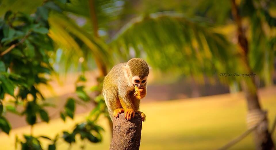 #monkey #throwback #smashingphotography #melaka #monkeyisland #weekend #daytrip #food #peanut