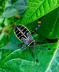 Beautiful insect !